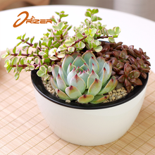 Alibaba china factory price home & garden self watering succulent plastic flower pot planter