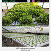 Decoration Home Vertical Dip Irrigation Tower