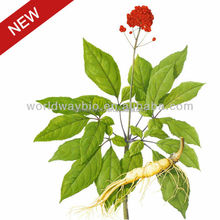 chinese red ginseng extract wholesale ,wholesale red gingseng extract , ginseng extract distributor