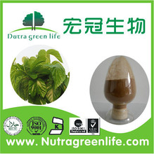 Best Selling Pure Mulberry Leaves Extract 1-deoxynojirimycin
