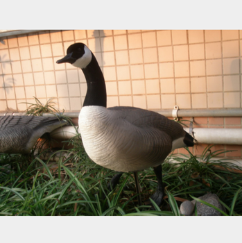 wholesale canada goose decoy for hunting, garden decorative goose mold