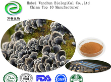 Natural YunZhi Mushroom Extract/Coriolus Versicolor Extract