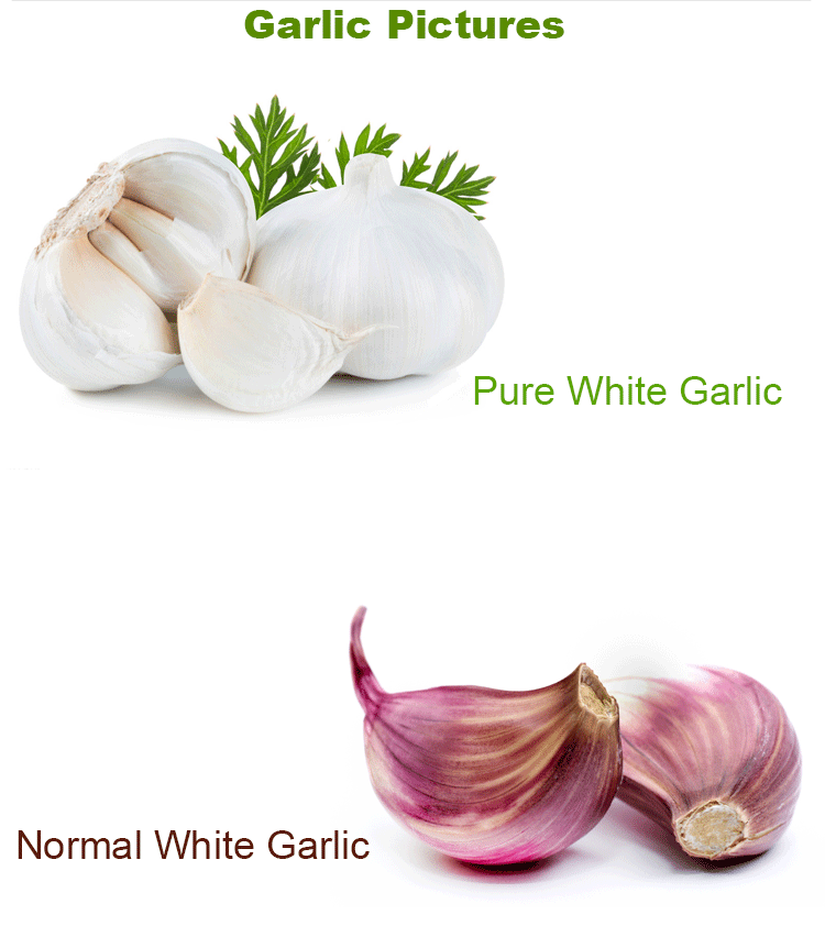 Natural Vegetables China Fresh Pure White Garlic Price 4p in Carton For Israel