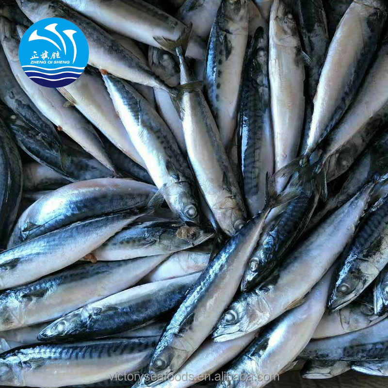 Wholesale Competitive Price Fresh Frozen Spanish Mackerel
