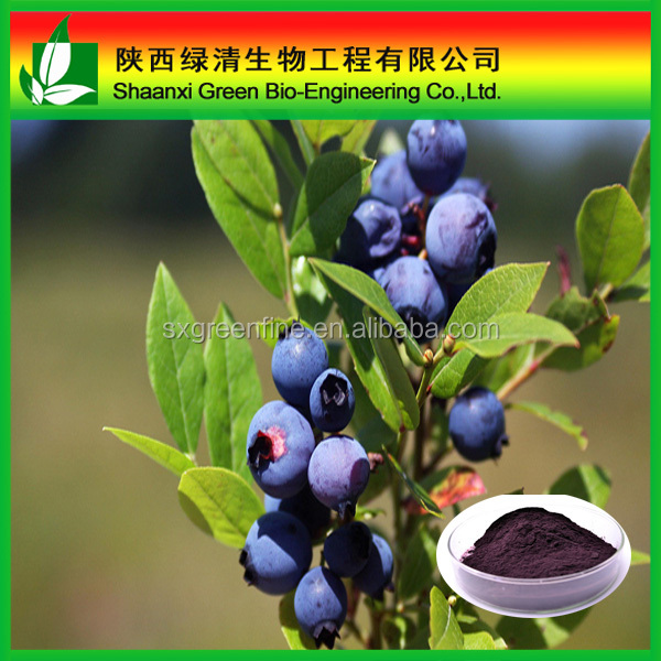 Free sample 2015 Huckleberry Extract anthocyanidins Supplement Anthocyanosides