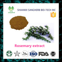 Sangherb supply high quality rosemary lead extract 10:1 powder