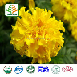 pure marigold flower extract lutein,marigold root extract