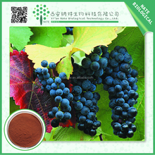 High quality Grape seed extract powder OPC 95% ORAC>16000