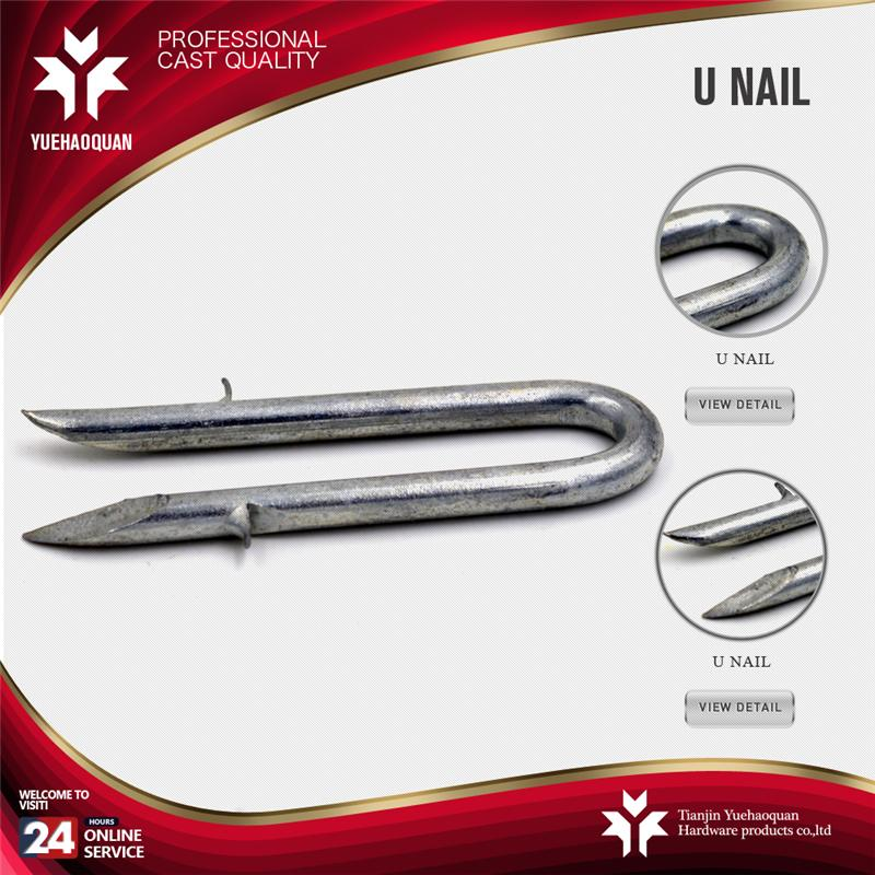 galvanized common iron nails from Tianjin factory