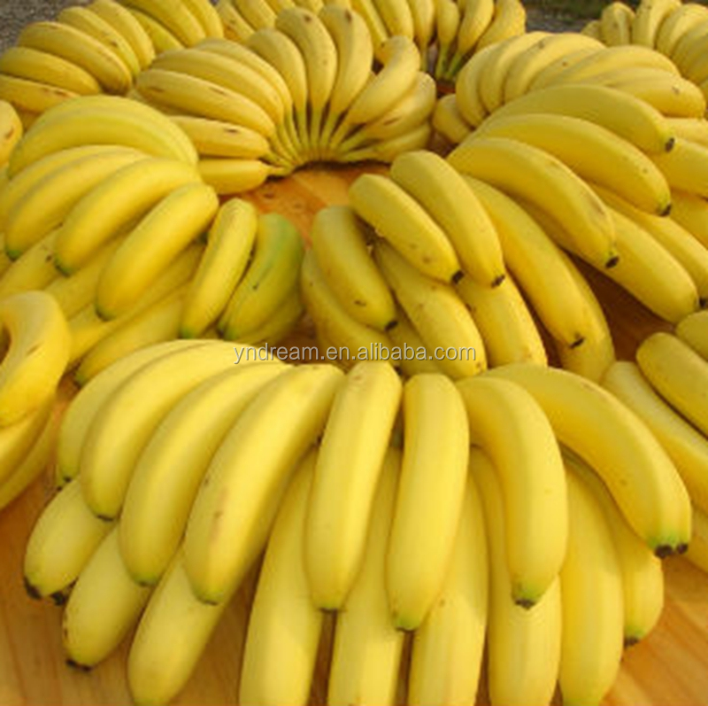 Best quality and hot sale fresh fruit fresh carvendish banana from China wholesaler