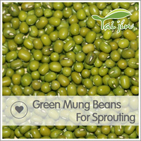Good Quality Raw Green Mung Beans