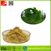 High Quality Natural Ginkgo Biloba Extract