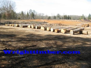 White Oak Veneer Logs