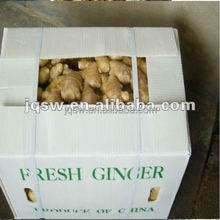 dried ginger in 8kg pvc carton packing