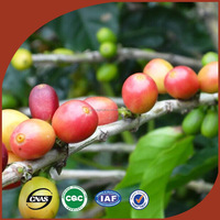 Coffee Bean Type ethiopian sidamo coffee