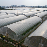 High Quanlity Green House For Vegetables
