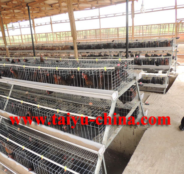 layer farming 5000 birds pdf