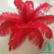 Dyed Large Red Color South Africa Ostrich Feathers for Wedding Decor and Carnival Festivals