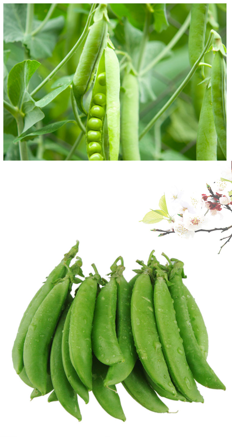 Popular Fresh Vegetable Snow Peas