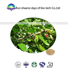 Organic dried Mulberry Leaf Extract Herbal Extract Powder with GMP Standard