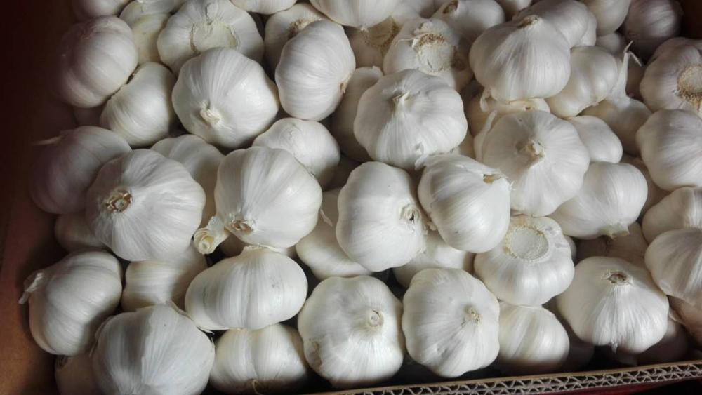 Pure white garlic new crop in carton