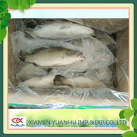 Fresh Seafood Big Barramundi
