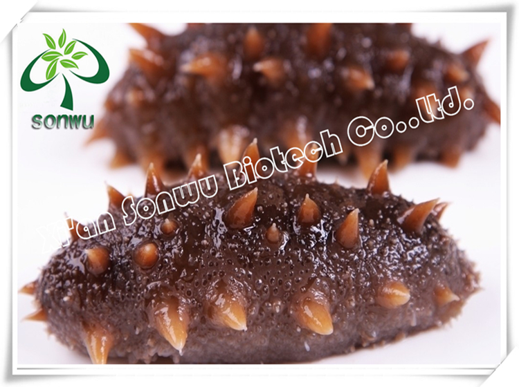 Sea Cucumber Extract/Trepang Extract