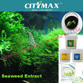 Hot!!! Super Seaweed Extract Powder