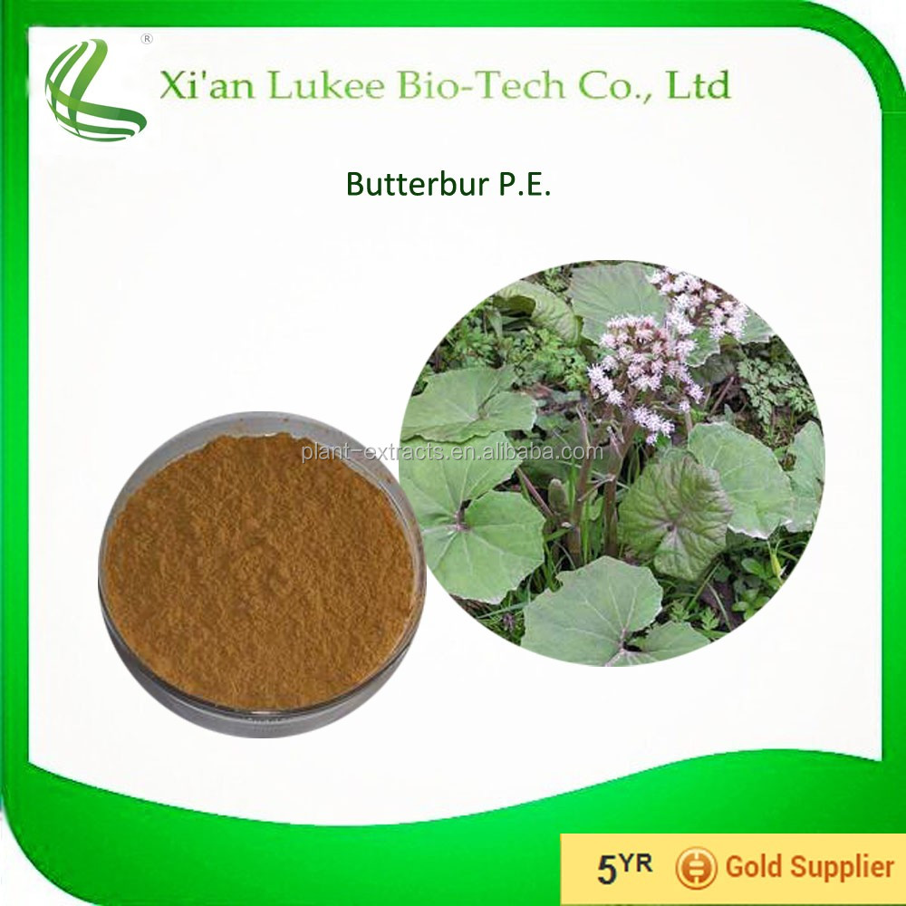 Hot selling organic butterbur powder used in detary supplement