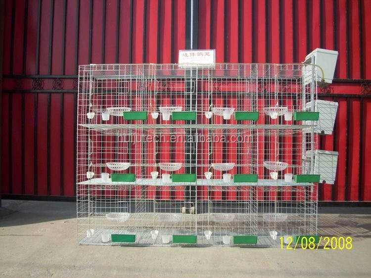 layer egg chicken cage/poultry farm house design/China large wire parrot and pigeon breeding cages