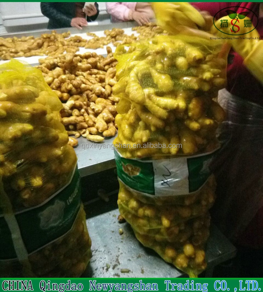 Chinese Fresh Ginger Exporters : Europe/Southeast Asia Ginger