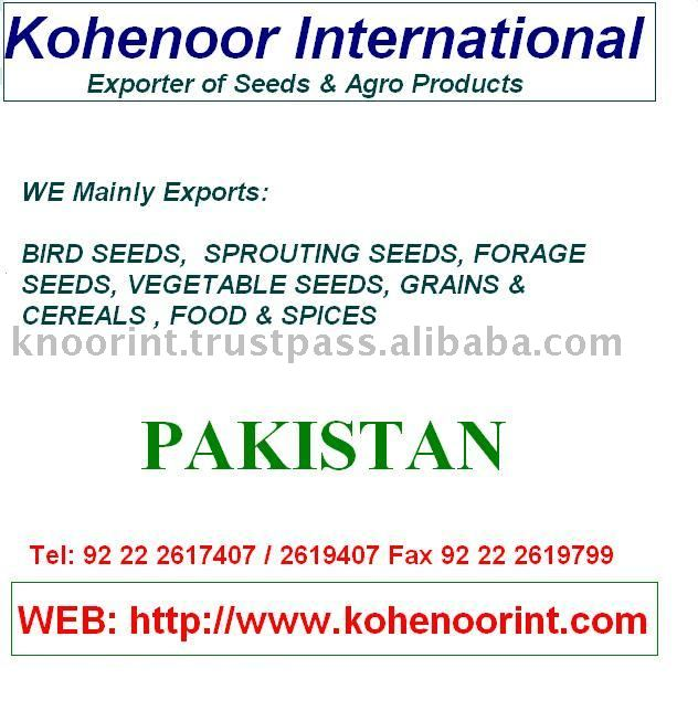 Ajwain Seeds Top Quality