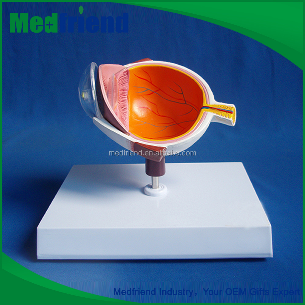 MFM023 Buy Direct From China Wholesale Eye 3d Model Cutaway