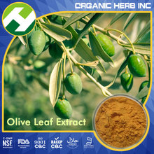 High Quality Pure Olive Leaf Extract/High purity Oleuropein 60% in low price