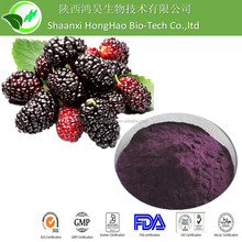 High Quality Mulberry Fruit Powder Extract / Mulberry Fruit P.E.