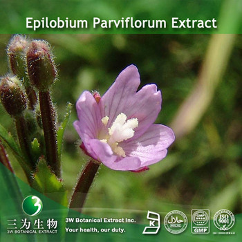 Epilobium parviflorum botanical extract 10:1 supplied by 3W Factory