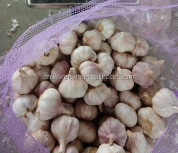 2017 china new garlic price