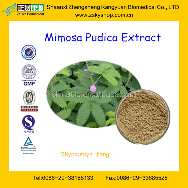 Factory Offer for Natural Sensitive plant Extract Powder 10:1