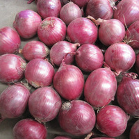 2016 new crop fresh red onion price