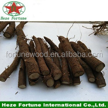 Paulownia tomentosa root cut for breeding