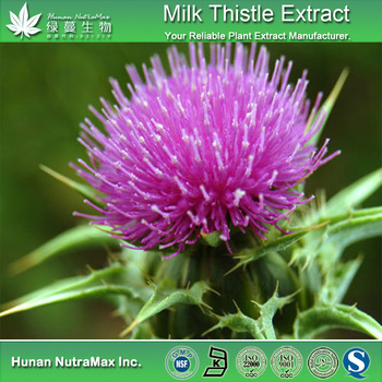 Pure natural water soluble Milk Thistle Extract Powder