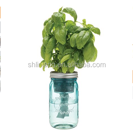 Wholesale manufacturer China suppliers modern sprout garden jar basil glass sprout jar clear