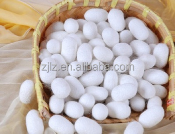 Factory wholesale natural dry double spring silk cocoon
