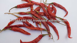 INDIAN RED CHIILLI TEJA