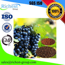 factory supply natural grape seed plant extract