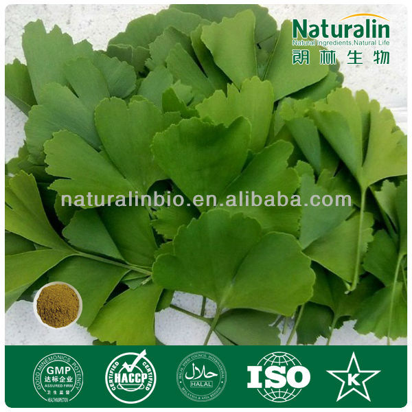 ISO,QS,Kosher,BV certified Manufacturer Supply High Quality Ginkgo P.E.