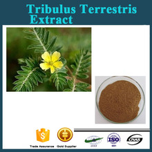 Anti-aging plant extract Hot sale Tribulus Terrestris extract/Saponins 99%