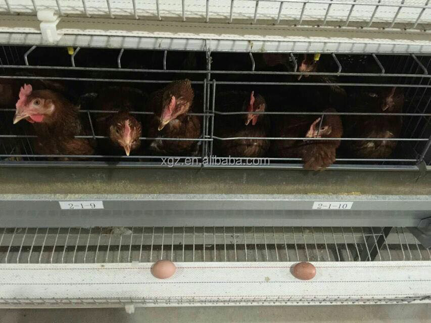 used chicken egg layer cages type for sale