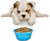 OEM 1 Color Tableware 100% Food Grade Collapsible Silicone Pet Bowl