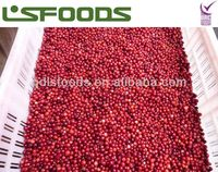 IQF lingonberry wild forest berry